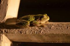Крупный план лягушки на ноче Стоковые Фото