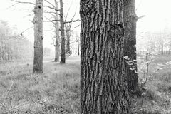 крупный план carvings баньяна предпосылки укореняет ствол дерева Стоковое Изображение RF