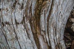 Крупный план Driftwood - предпосылка Стоковое Фото