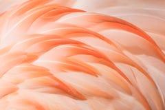 Крупный план II фламинго Стоковые Фотографии RF