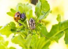 Крупный план Ladybug и паука стоковое изображение