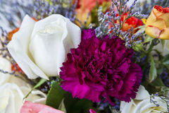 Крупный план Rosebuds Стоковое фото RF