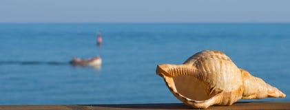 Крупный план Seashell на предпосылке моря на заходе солнца Стоковые Фото