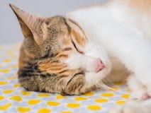 Крупный план Striped сна кота на кровати Стоковое Изображение RF