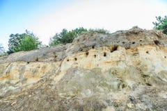 Крутая стена с гнездами ласточек банка, riparia песка Riparia Стоковая Фотография RF