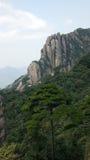 Крутые холмы и сосенки Стоковые Изображения RF