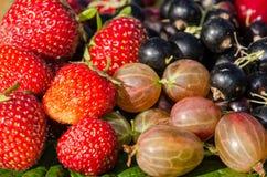 Крыжовник, клубника, вишня и blackcurrant Стоковое Изображение RF