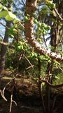 крыжовник Стоковая Фотография RF