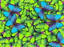 Крыла бабочки Morpho Стоковые Изображения