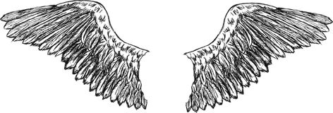 крыла вектора орла Стоковая Фотография RF