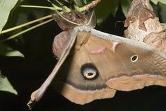 крыла засыхания Стоковые Фотографии RF