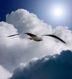крыла свободы Стоковое фото RF