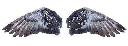 крыла стоковое изображение rf