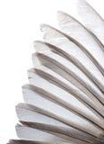 крыло пера птицы Стоковая Фотография