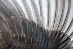 крыло пера птицы Стоковая Фотография RF