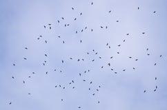 крыло переселения хоука осени обширное Стоковое Фото
