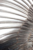 крыло текстуры птицы Стоковые Изображения RF