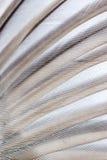 крыло текстуры птицы Стоковая Фотография RF