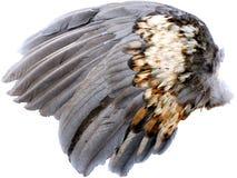 крыло Стоковые Фотографии RF