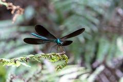 Крылья Dragonfly на лист стоковое фото rf
