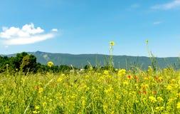 Крым цветет гора Украина ландшафта Стоковые Фотографии RF
