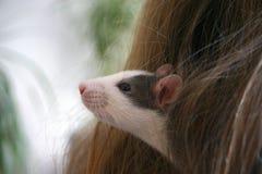 Крыса в волосах девушки Стоковые Изображения RF