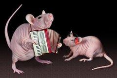 крыса игрока аккордеони Стоковые Фото