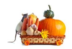 Крыса и овощи Стоковое Изображение