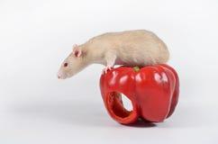 Крыса и овощи Стоковые Изображения