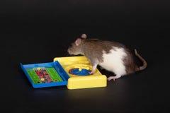 Крыса поворачивает рулетку стоковые изображения
