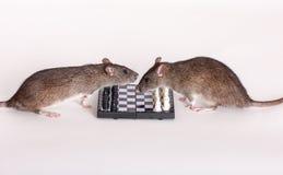 Крысы о доске Стоковые Изображения