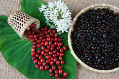 Крытое оформление, кофейное зерно, предпосылка искусства кафа Стоковые Фото