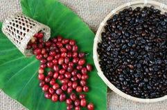 Крытое оформление, кофейное зерно, предпосылка искусства кафа Стоковые Фотографии RF