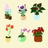Крытые цветковые растения Стоковое фото RF