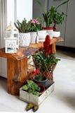 Крытый ботанический сад для украшения комнаты Стоковое фото RF