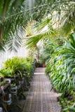 Крытый замка Lednice парника Свежие заводы, тропические джунгли и ладони Стоковые Фото