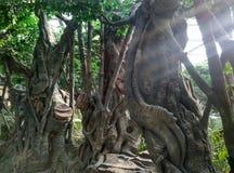 Крытый искусственный тропический ландшафт стоковая фотография rf