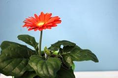 Крытый цветок в баке стоковое изображение