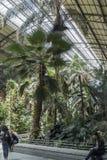 Крытый Palacio de Cristal, Мадрид Стоковая Фотография