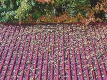 Крыть черепицей черепицей крыша осени Стоковая Фотография RF