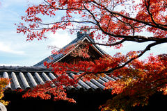 Крыша виска с деревом японского клена в осени переднего плана стоковая фотография rf