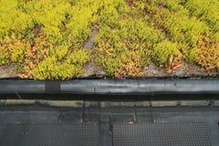 крыша детали зеленая частично стоковое изображение rf