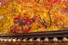 Крыша дерева Gyeongbukgung и клена в осени Стоковое фото RF