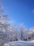 Крыша & деревья Стоковые Изображения RF