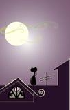 крыша кота Стоковое фото RF