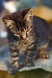 крыша котенка стоковые фото