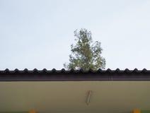 Крыша дома и дерева Стоковые Изображения RF