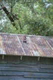 Крыша олова Стоковое Изображение