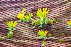 Крыша плитки глины с округленными концами стоковые фотографии rf