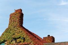 крыша плюща Стоковая Фотография
